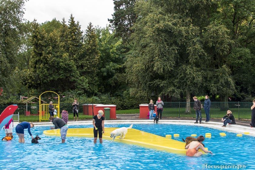 Groningen Helpman De Papiermolen Baas Hond Zwemmen 4 Jouwstad